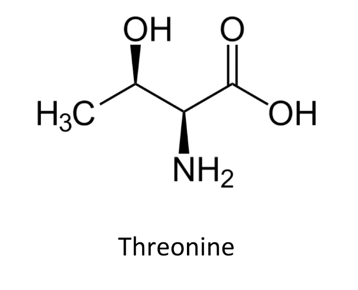 What is Threonine? Brief Explanation & Example