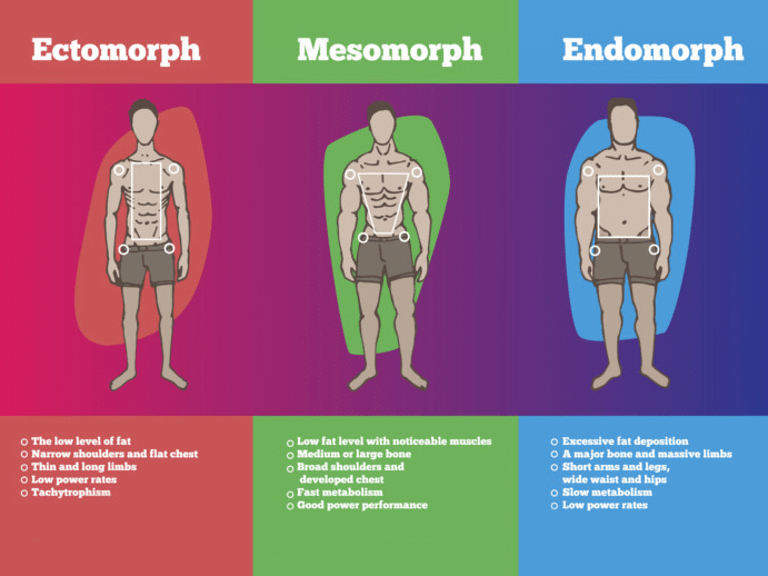 Endomorph Diet