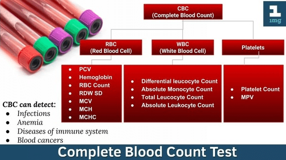 Mcv Blood Test High